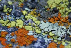 Offroading Home: Lichen Unto Us - Gold Butte Full Of It