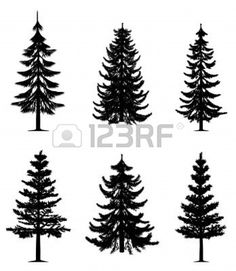 Pine trees collection Stock Photo - 8219941