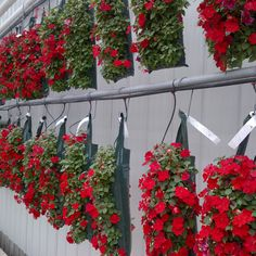 With Al's Flower Pouch, the options for growers are endless. Grow your pouches on the wall of your greenhouse to optimize ROI! #alsflowerpouch #afp #amahort #roi #greenhouse #grower #amasolutions #verticalgarden #verticalgardening #gardenideas #gardeninspiration #wallbag #flowerbag #plants #greenthumb