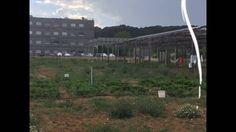 agrivoltaïque ( l'agroforesterie nouvel génération ) par Eco Solution En...