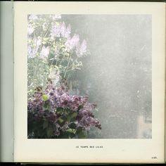 Le temps des lilas // Linda Vachon