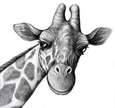 Image result for student black and white pencil animal drawings