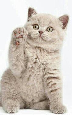 High five??