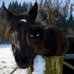 Even horses and kitties can be friends.