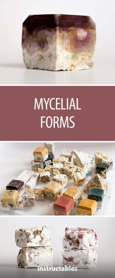 "This project gives new meaning to ""mold-making"" when the mycelial part of a mushroom is contained to grow in different shapes #mycelium #mushrooms #art #science"