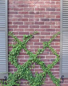 Front wall trellis ... wire pattern. What about this for your wall, Tracy?