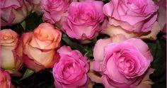 Анимационная картинка. Красивая роза…  Анимационная картинка. Красивая роза — для Вас, дорогие друзья !   Не забудьте указать свой адрес электронной почты, чтобы полу…