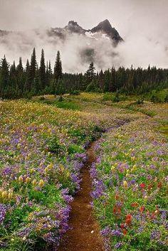wildflower trail, Mount Rainier National Park, WA by Asmodel
