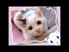 ♬ Cute Cat Singing ♬♬♬ [MV Version] - http://positivelifemagazine.com/%e2%99%ac-cute-cat-singing-%e2%99%ac%e2%99%ac%e2%99%ac-mv-version/ http://img.youtube.com/vi/sX9FiQ-cLhI/0.jpg  Cute Cat Singing [MV Version] イエネコの起源は、ネズミを捕獲させる目的で飼われ始めた(狭義の)ヤマネコ(Felis silvestris)の家畜化であり、分類学上… Judy Diet Programme ***Start your own website with USD3.9 per month*** Please follow