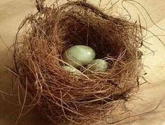 Birds Nests From coco basket liners