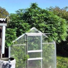 It'll be sweet, no one will clock on, they finish at about high 👍🏻 hydroponics grow greenhouse sky plants cannabis fruits big growbig nutes sunlight natural outdoors scrog gavita lumi growth bloom salford growshop roots pot bud Marijuana Plants, Buy Weed Online, Growing Tomatoes, Edgy Memes, 90s Memes, Hydroponics, Funny Pictures, Instagram Posts, Thicc Anime