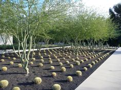 Annenberg Center at Sunnylands, California. Design by The Office of James Burnett (Landscape Architecture)