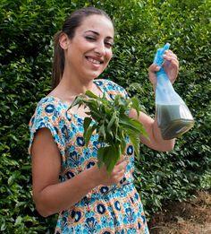 Cómo hacer purín de ortiga paso a paso. Para usar cómo insecticida, fungicida, abono o activador de suelos muertos