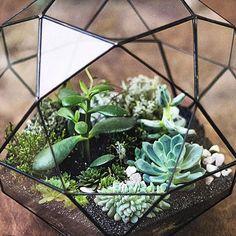 Irregular Polyhedral Geometric Glass Terrarium Lantern Succulent Plant Flowerpot
