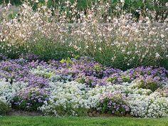 Piochez des idées de massifs fleuris faciles parmi les compositions du Parc floral de Paris avec les conseils des experts en jardinage de Rustica.