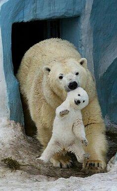 Mama and baby bear.