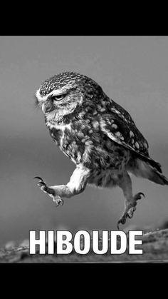 """""""Hiboude"""" ou """"il boude"""". XD"""