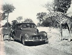 Wankie National Park 1959 (Rhodesia, now known as Zimbabwe) - photo by Howard Timmins