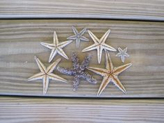 Starfish from Abaco