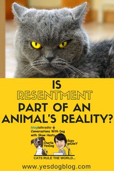 We describe feelings and emotions, and for animals these particular definitions do not exist. Is resentment something that exists for an animal, for example? No, resentment is unknown to the animal kingdom. Feelings And Emotions, Definitions, Animal Kingdom, Dogs, Animals, Animales, Animaux, Pet Dogs, Doggies