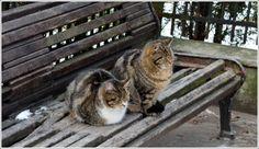 kaliningrad cats