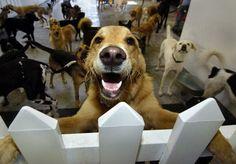 Dog Daycare Startup Tips