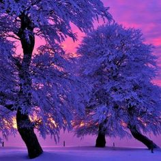 Winter purple sunset