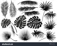 Silhouettes of tropical leaves (coconut palm, monstera, fan palm, rhapis). Set of hand drawn vector illustrations on white background. Palm Tree Leaves, Tropical Leaves, Palm Trees, Coconut Tree Drawing, Silhouettes, Willow Tree Wedding, Tree Stencil, Cool Tree Houses, Tree Artwork