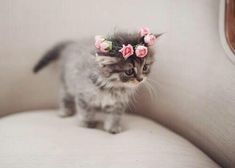 Cats with flower crowns
