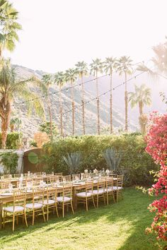 Rick and Vanessa's Lush Palm Springs Wedding Botanical Gardens Wedding, Garden Wedding, Reception Decorations, Event Decor, Palm Springs, Spring Wedding Inspiration, Wedding Ideas, Lush, Planning