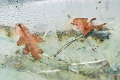 Image result for Fay Godwin colour photography Stephen Gill, Colour Photography, Aqa, Natural Forms, Natural History, Freedom, Stage, Frozen, In This Moment