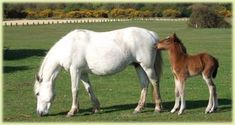PICTURES OF HORSes - Google Search