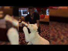 Ex Manchester Uniteds Patrice Evra feeds a lion