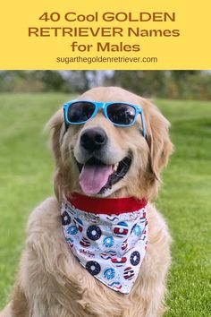 In search for a cool golden retriever dog names, here are a list of names you can use for your new golden retriever dog. #dognames #dogbreeed #goldenretrievers Funny Boy Names, Girl Dog Names, Cute Names For Dogs, Cute Dogs, Female Golden Retriever, Golden Retriever Names, Man And Dog, Girl And Dog, What Dogs