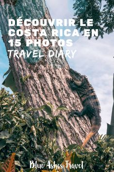 Pin Travel Diary Costa Rica Voyage Costa Rica, Blue Ash, Nature Sauvage, Road Trip Destinations, Les Cascades, Photo Blue, Parc National, Blog Voyage, Belle Photo