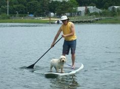 Getting dogs on SUP