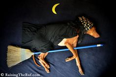 Woman Creates Whimsical Picture Adventures for Sleeping Pup