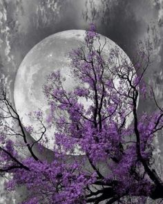 Rainbow Photography, Moon Photography, Beautiful Nature Wallpaper, Beautiful Moon, Fantasy Landscape, Fantasy Art, Nature Pictures, Beautiful Pictures, Warrior Cats Art