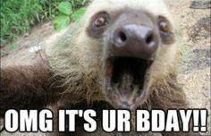 Funny, birthday, sloth, face