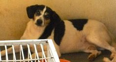 SENHORA Dogs, Animals, Pet Adoption, Animales, Animaux, Doggies, Animal, Animais, Dieren