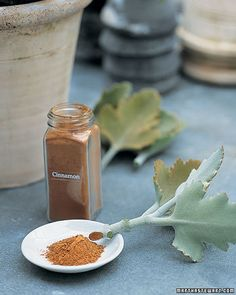 According to Martha Stewart-- Dip plant cuttings in cinnamon to prevent fungi and rot.