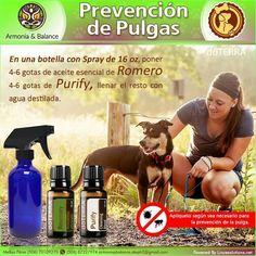 Prevención de pulgas