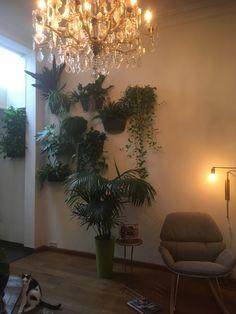 Living room wall garden wall plants