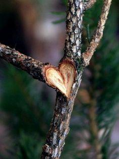 Coeur dans une branche. Bien fait ;D