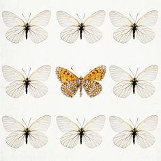 butterflies  Source: is-theblog.blogspot.ca