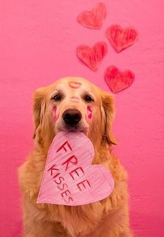 Free Kisses from yours dog buy ValentinesDay goodies At CanineStyles.com