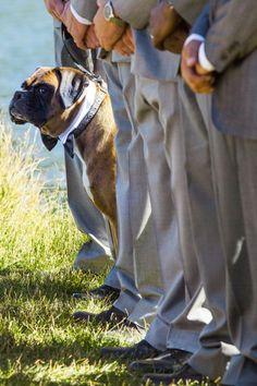 #dog #wedding #photo - just one of the guys ;)