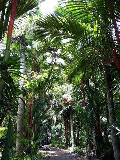 a lush pathway :) (ho chi minh, vietnam, southeast asia)