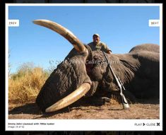 This almost made me cry at work the other day. This is the guy that owns Jimmy Johns and one of the many animals he hunts.   I refuse to eat there anymore on account.  Did I mention how much I love elephants??
