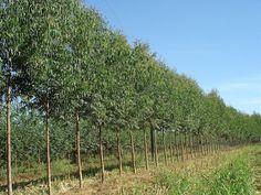 Compensar CO2 con plantaciones acabaría con los ecosistemas naturales